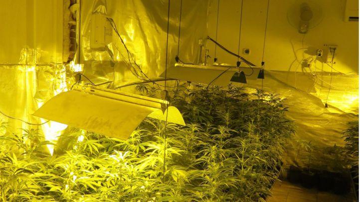 Plantación de marihuana de la casa okupada