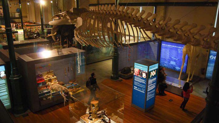 Una de las salas del Museo Nacional de Ciencias Naturales.