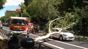 Coche atrapado bajo las ramas de un árbol que ha caído por las fuertes rachas de viento