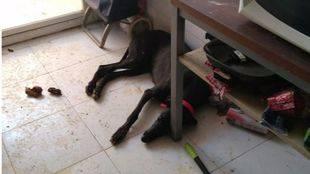 Rescate de varios animales en un piso de Usera.