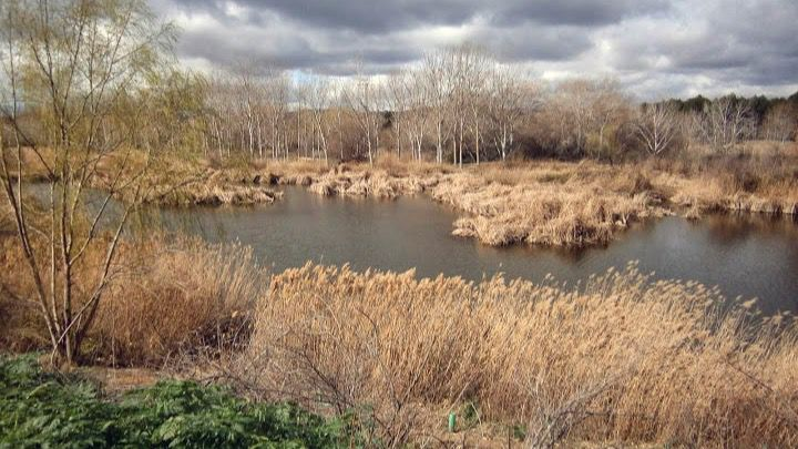 Hojas y restos vegetales, la mayoría de residuos del río Henares