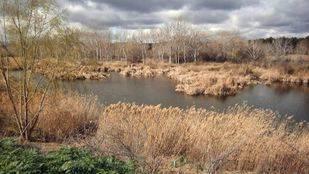 Lagunas Las Islitas en Mejorada del Campo Humedal del rio Henares