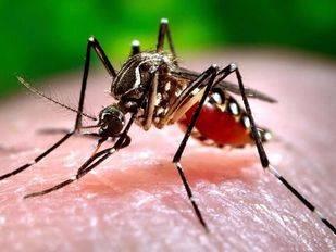 En marcha la red de vigilancia para controlar la posible llegada del mosquito tigre