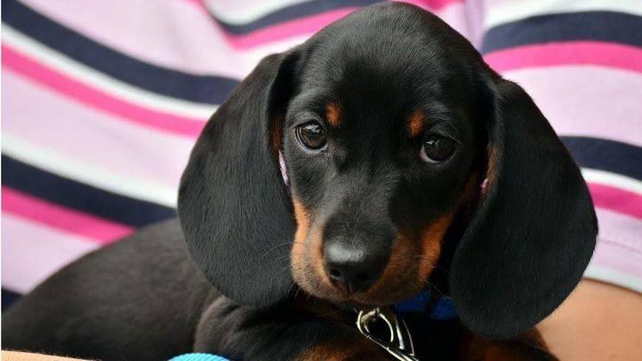 Foto de archivo: un perro