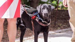 Getafe destinará más de setenta mil euros a la terapia con perros para personas con discapacidad