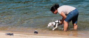 Los bañistas aprovechan para enseñar a nadar a su mascotas en el pantano de San Juan.