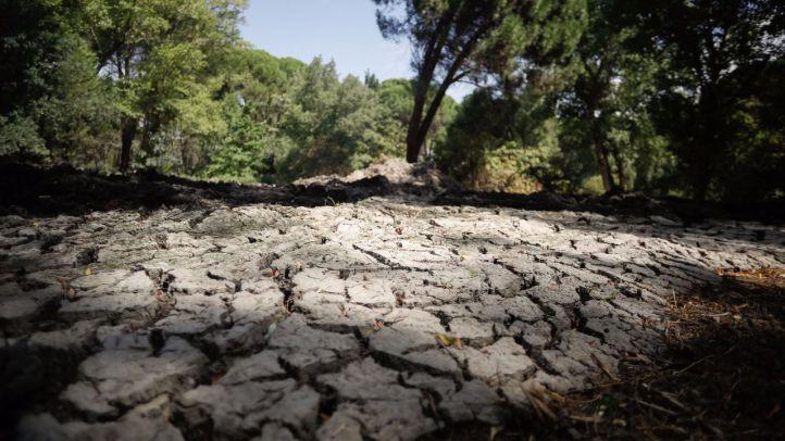 Extraídas varias toneladas de lodo en el arroyo Antequina