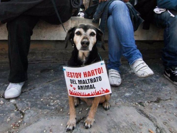 Protesta contra el maltrato animal.