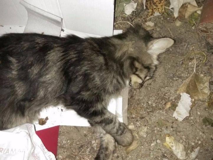 Una veintena de gatos, envenenados en Villalba