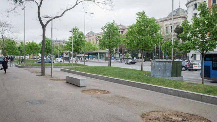 Tala de árboles en el eje Recoletos-Paseo del Prado