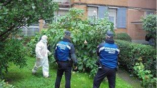 Agentes de la Policía Municipal y operarios del Servicio de Limpieza Urgente proceden a retirar las plantas tóxicas.