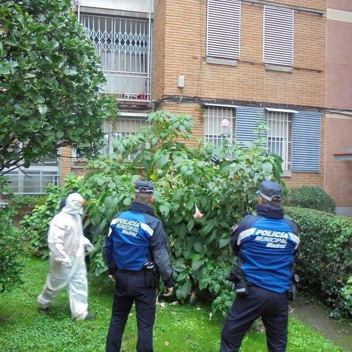 La Policía Municipal retira 66 plantas de burundanga