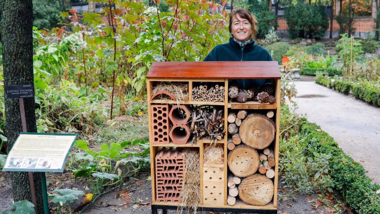 Suites y habitaciones para los insectos del jard n for Insectos del jardin