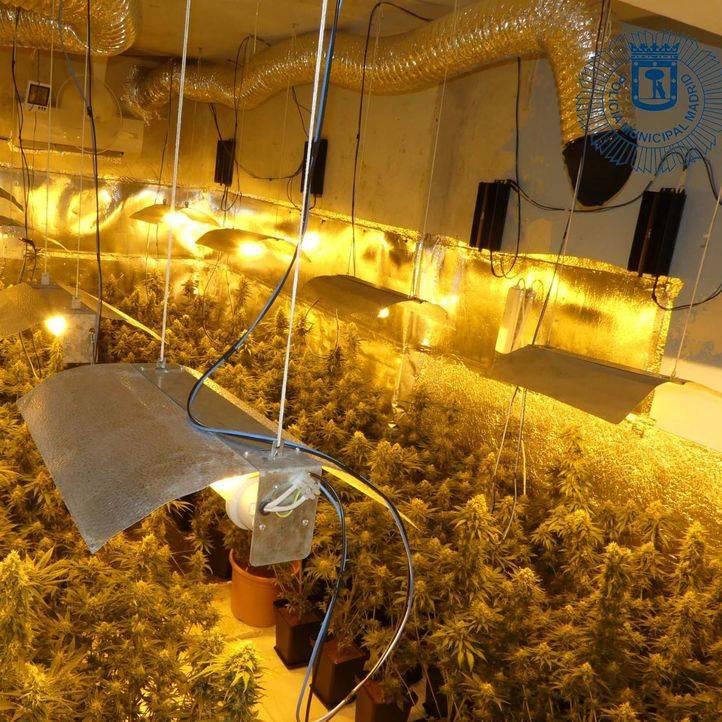 Desmantelada una plantación de marihuana 'indoor'