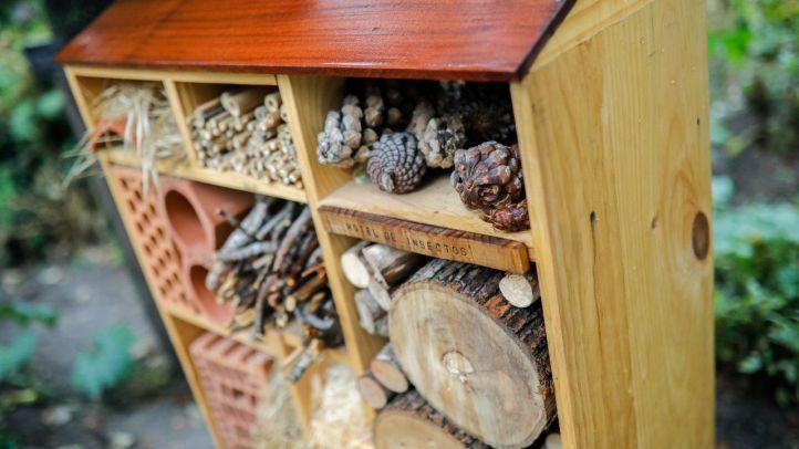 Habitaciones para los insectos del Jardín Botánico