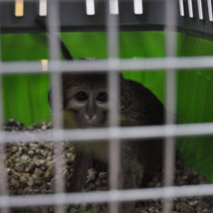 Dos monos abandonados, rescatados