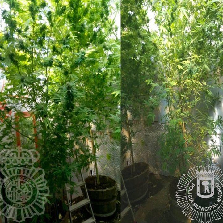 Detenido en Vicálvaro con 24 kilos de marihuana