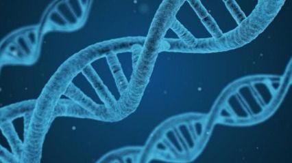 Estudios genéticos y traumatología, dos especialidades muy demandadas