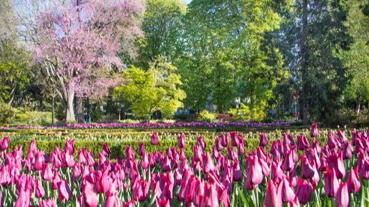 Tulipanes en el Jardín Botánico