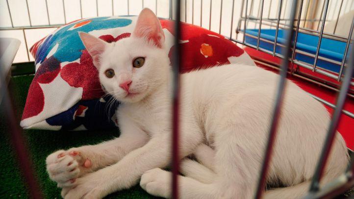 Foto de archivo de un gato en adopción