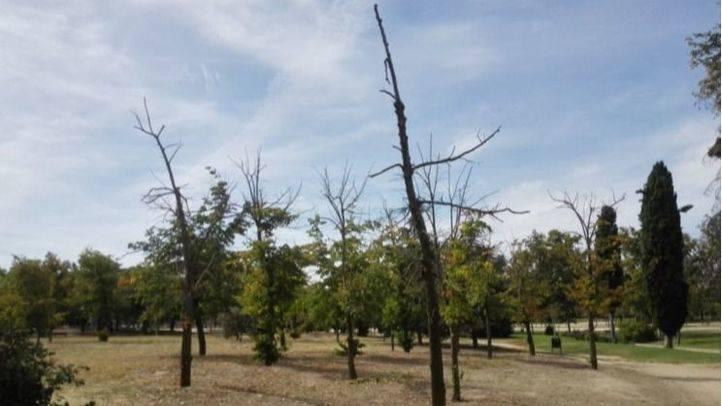 Árboles secos que no han sido saneados ni repuestos en el Parque de las Cruces.