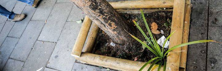 Jardines en alcorques en el barrio de Universidad, más conocido como Malasaña, dentro de la iniciativa 'Tu barrio se planta'.