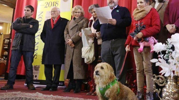 Un desfile de perros que promueve la adopción