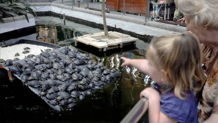 Adiós a las tortugas en el estanque de Atocha