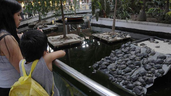 Dos niños contemplan las tortugas del estanque del jardin tropical de la estacion de Atocha