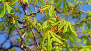 'Huele' a primavera: así se activan los avisos por polen