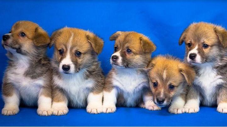 Los mejores Blog de información animal