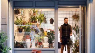 Orquídea Drácula: laboratorio floral de criaturas vegetales