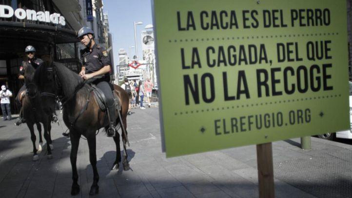 Madrid preguntará por el registro de ADN canino