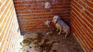 Maltrato animal en Villa del Prado
