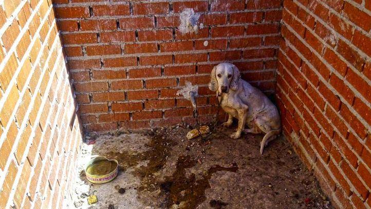 Año y medio de prisión por encarcelar a 55 perros