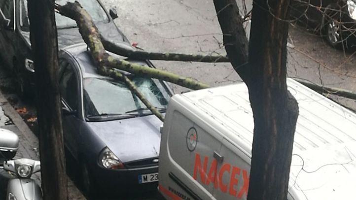 Un árbol se ha caído encima de un coche en el número 126 del Paseo de la Castellana.