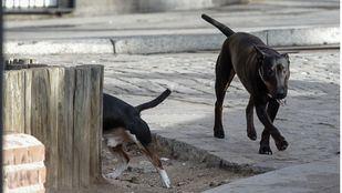 Los canes eran de un vecino. Imagen de archivo.