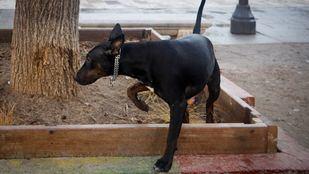 La documentación de los perros de Miraflores no estaba en regla