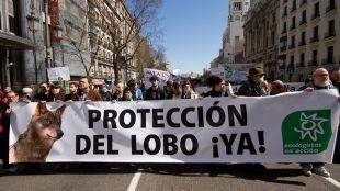 Cientos de personas, unidas por la defensa del lobo ibérico