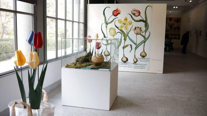 Exposición 'Tulipa, tulipae. El tulipán ilustrado'.