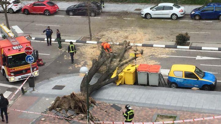 Herido un hombre tras la caída de una rama en Latina
