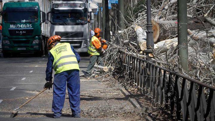 Foto de archivo de técnicos del Ayuntamiento en su labor de tala de árboles.