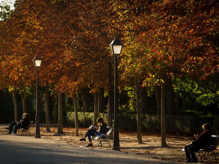 El arbolado de Madrid, asignatura pendiente del Ayuntamiento