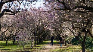 El parque de la Quinta de los Molinos