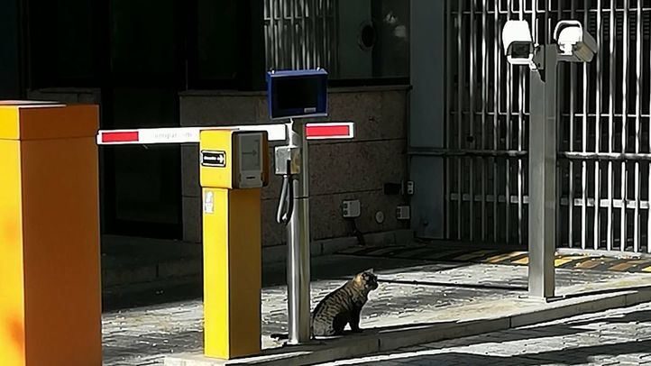 La colonia felina de la Asamblea de Madrid, desprotegida