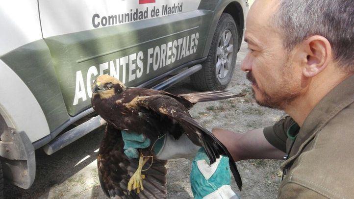 Un curso de técnicas forenses sobre animales