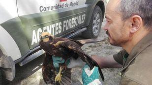 Imagen de archivo de un agente forestal