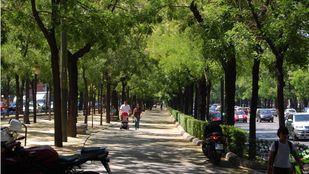 Bulevar de peatones en el interior del paseo de la Castellana.