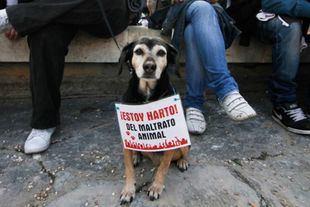 Imagen de archivo: Protesta contra el maltrato animal.