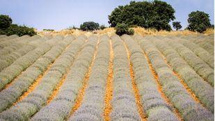 BBVA lleva la transformación digital al sector agrario